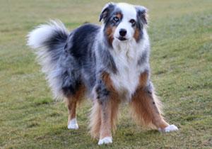 O´Shit Hund Siska - spielen - Kotbeutel entsorgen